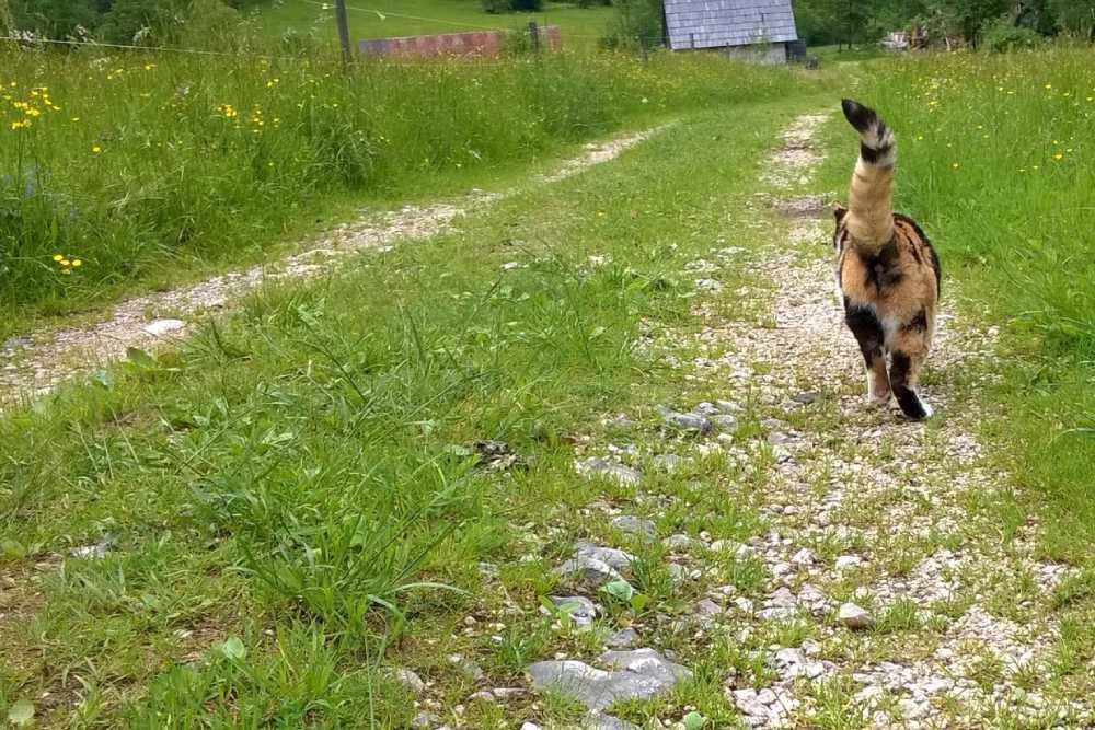 Mačka na travniku