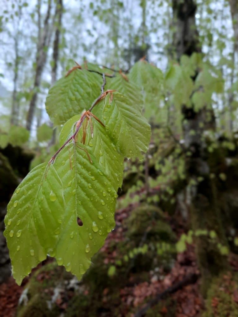 zelen pomladni gozd kaj početi na deževen dan apartma Pretner Lepena